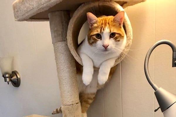 Cat Sitting Visits