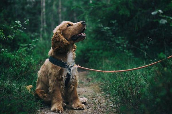 Private Dog Walking In Novato